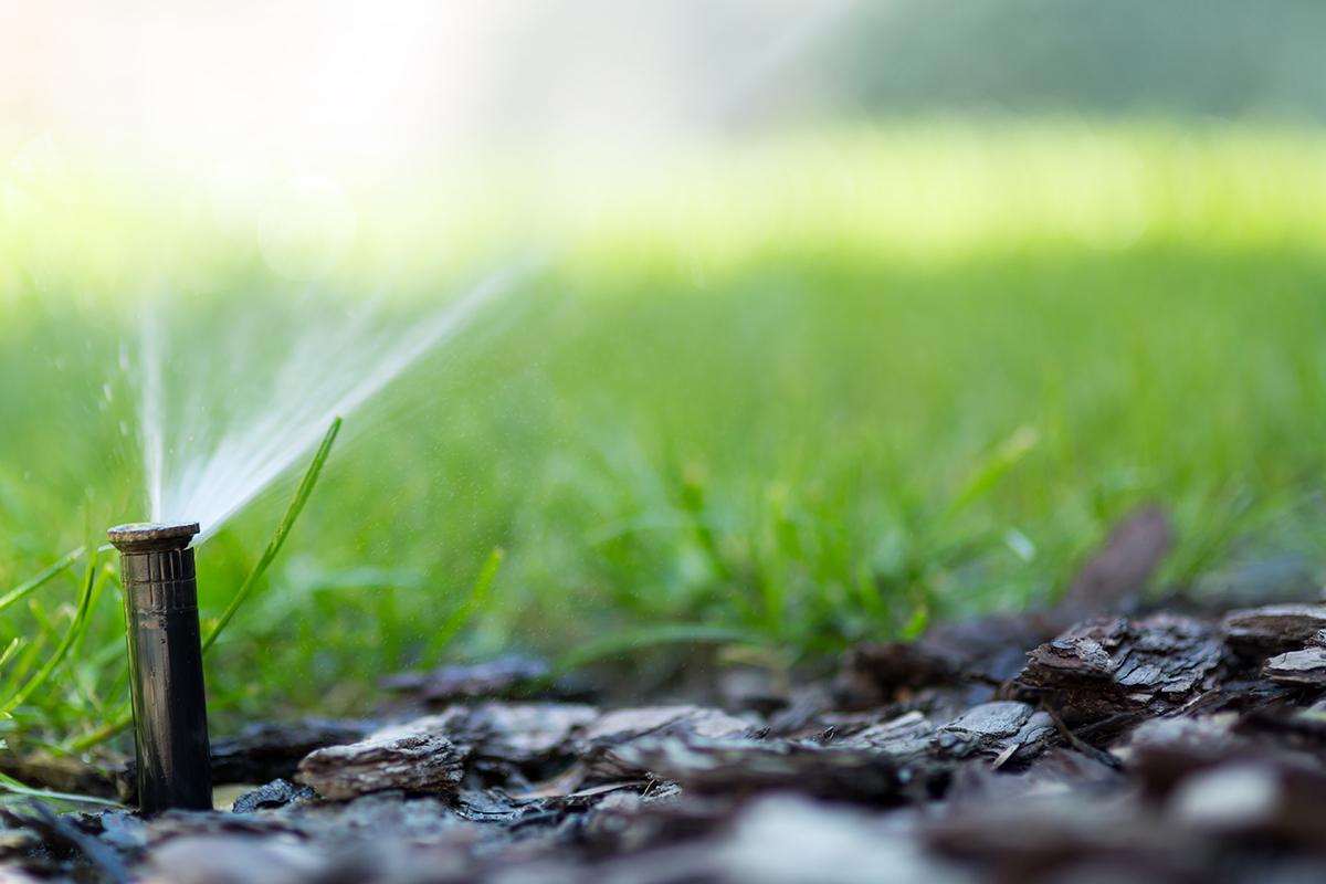 Drip Irrigation vs. a Standard Sprinkler System