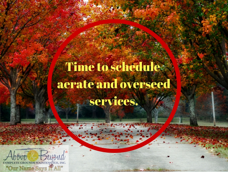 Time to schedule aerate and overseed services.